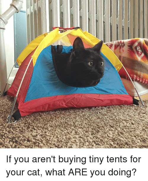 Memes, 🤖, and Cat: If you aren't buying tiny tents for your cat, what ARE you doing?