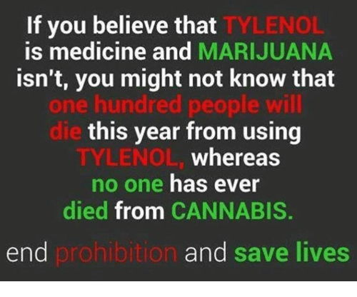 Cannabis: If you believe that  TYLENOL  is medicine and  MARIJUANA  isn't, you might not know that  one hundred people will  this year from using  whereas  TYLENOL  no one has ever  died from CANNABIS  end  prohibition  and save lives