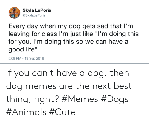 Memes Dogs: If you can't have a dog, then dog memes are the next best thing, right? #Memes #Dogs #Animals #Cute