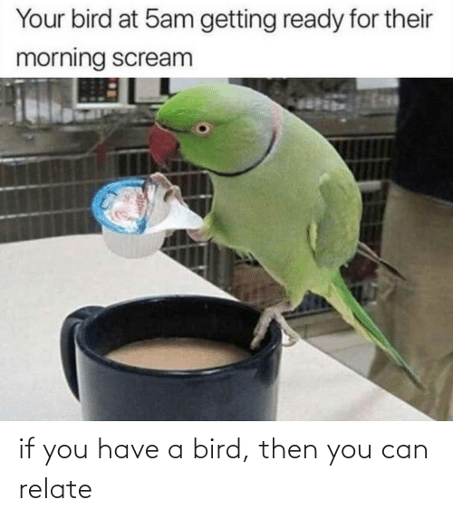Relate: if you have a bird, then you can relate