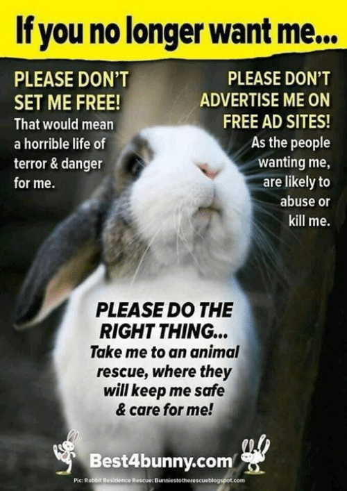Rabbit: If you no longer want me...  PLEASE DON'T  PLEASE DON'T  ADVERTISE ME ON  SET ME FREE!  FREE AD SITES!  That would mean  As the people  a horrible life of  wanting me,  are likely to  terror & danger  for me.  abuse or  kill me.  PLEASE DO THE  RIGHT THING...  Take me to an animal  rescue, where they  will keep me safe  & care for me!  Best4bunny.com  Pic: Rabbit Residence Roscue: Bunniestotherescueblogspot.com