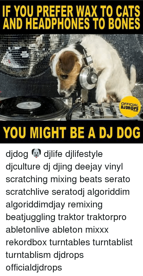 serato: IF YOU PREFER WAX TO CATS  AND HEADPHONES TO BONES  OFFICIAL  DJDROPS  YOU MIGHT BE A DJ DOG djdog 🐶 djlife djlifestyle djculture dj djing deejay vinyl scratching mixing beats serato scratchlive seratodj algoriddim algoriddimdjay remixing beatjuggling traktor traktorpro abletonlive ableton mixxx rekordbox turntables turntablist turntablism djdrops officialdjdrops