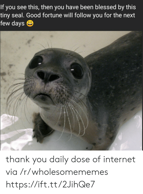 Daily Dose: If you see this, then you have been blessed by this  tiny seal. Good fortune will follow you for the next  few days thank you daily dose of internet via /r/wholesomememes https://ift.tt/2JihQe7