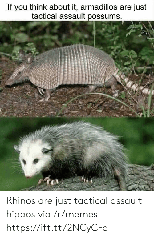 hippos: If you think about it, armadillos are just  tactical assault possums Rhinos are just tactical assault hippos via /r/memes https://ift.tt/2NCyCFa