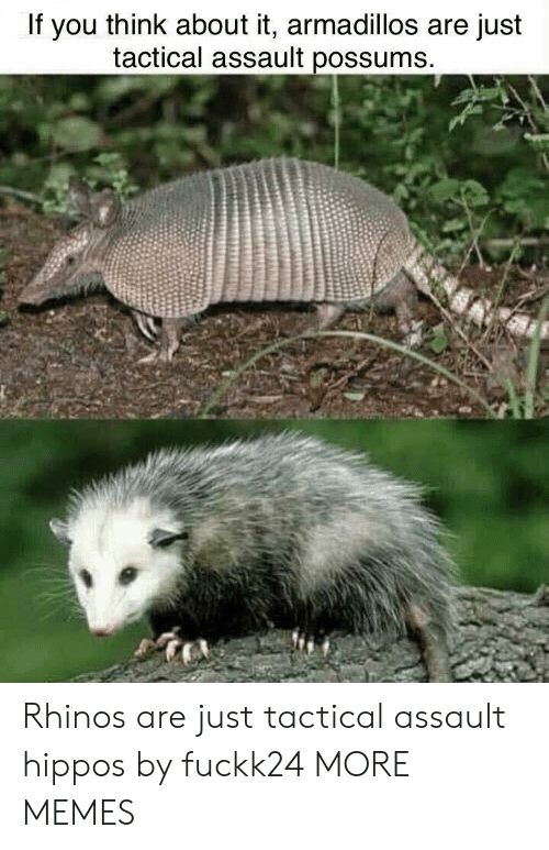 hippos: If you think about it, armadillos are just  tactical assault possums Rhinos are just tactical assault hippos by fuckk24 MORE MEMES