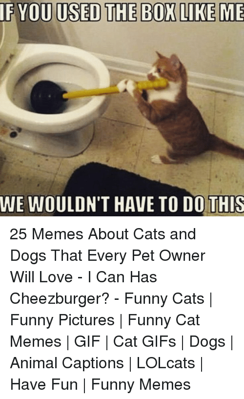 funny cat: IF YOU USED THE BOX LIKE ME  WE WOULDN'T HAVE TO DO!THIS 25 Memes About Cats and Dogs That Every Pet Owner Will Love - I Can Has Cheezburger? - Funny Cats | Funny Pictures | Funny Cat Memes | GIF | Cat GIFs | Dogs | Animal Captions | LOLcats | Have Fun | Funny Memes