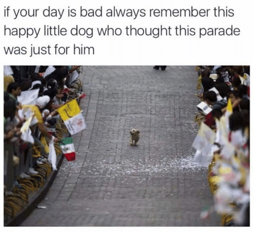 Bad, Dank, and Dogs: if your day is bad always remember this  happy little dog who thought this parade  was just for him