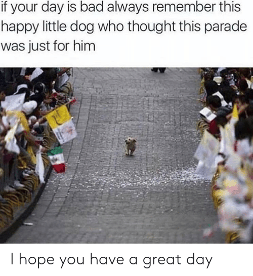 have a great day: if your day is bad always remember this  happy little dog who thought this parade  was just for him I hope you have a great day