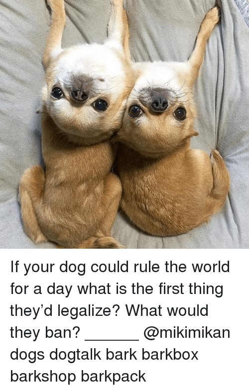 What Is The First: If your dog could rule the world for a day what is the first thing they'd legalize? What would they ban? ______ @mikimikan dogs dogtalk bark barkbox barkshop barkpack