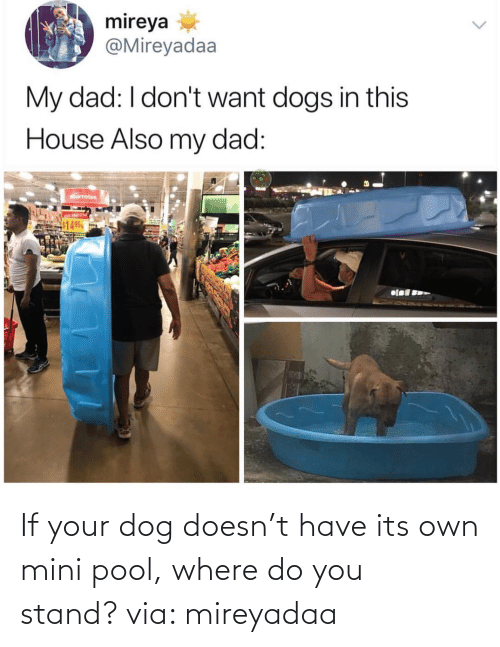 mini: If your dog doesn't have its own mini pool, where do you stand? via: mireyadaa