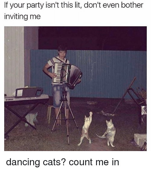Cats, Dancing, and Lit: If your party isn't this lit, don't even bother  inviting me dancing cats? count me in
