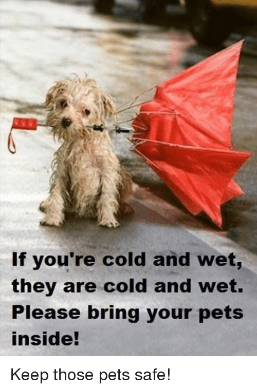 Memes, 🤖, and Wet: If you're cold and wet,  they are cold and wet.  Please bring your pets  inside! Keep those pets safe!