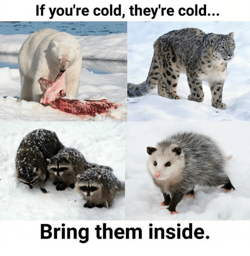 If Youre Cold Theyre Cold: If you're cold, they're cold...  Bring them inside