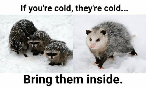 If Youre Cold Theyre Cold: If you're cold, they're cold...  Bring them inside.