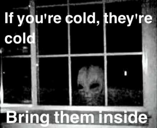 If Youre Cold Theyre Cold: If you're cold, they're  cold  Bring them inside
