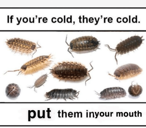 If Youre Cold Theyre Cold: If you're cold, they're cold.  put them inyour mouth