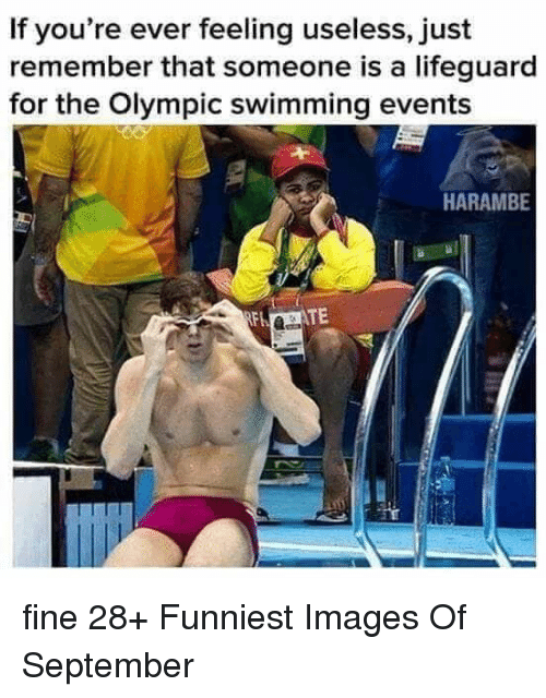 Images, Swimming, and Harambe: If you're ever feeling useless, just  remember that someone is a lifeguard  for the Olympic swimming events  HARAMBE  TE fine 28+ Funniest Images Of September