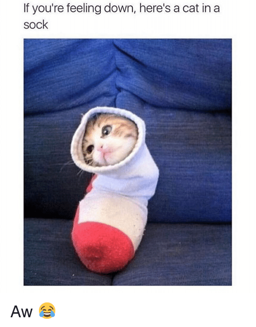 feeling down: If you're feeling down, here's a cat in a  sock Aw 😂
