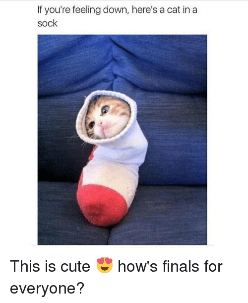 Cats, Memes, and 🤖: If you're feeling down, here's a cat in a  sock This is cute 😍 how's finals for everyone?