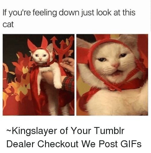 Cats, Dank, and Gif: If you're feeling down just look at this  Cat ~Kingslayer of Your Tumblr Dealer  Checkout We Post GIFs