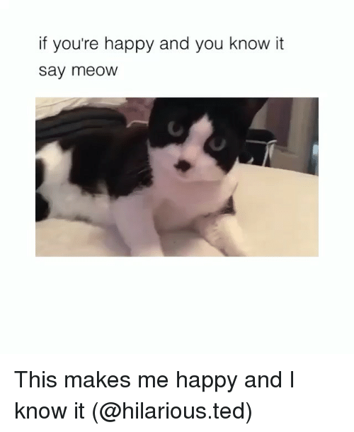 Funny, Ted, and Happy: if you're happy and you know it  say meOW This makes me happy and I know it (@hilarious.ted)