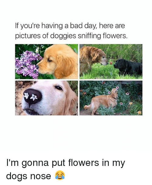 Bad, Bad Day, and Dogs: If you're having a bad day, here are  pictures of doggies sniffing flowers. I'm gonna put flowers in my dogs nose 😂