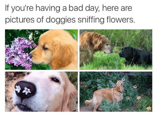 Bad, Bad Day, and Flowers: If you're having a bad day, here are  pictures of doggies sniffing flowers.