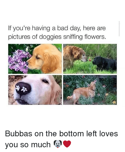 Bad, Bad Day, and Bubba: If you're having a bad day, here are  pictures of doggies sniffing flowers. Bubbas on the bottom left loves you so much 🐶❤️