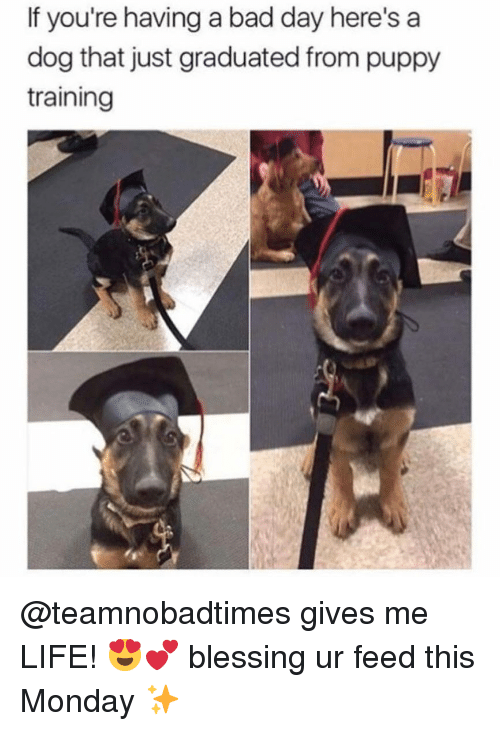if youre having a bad day: If you're having a bad day here's a  dog that just graduated from puppy  training @teamnobadtimes gives me LIFE! 😍💕 blessing ur feed this Monday ✨