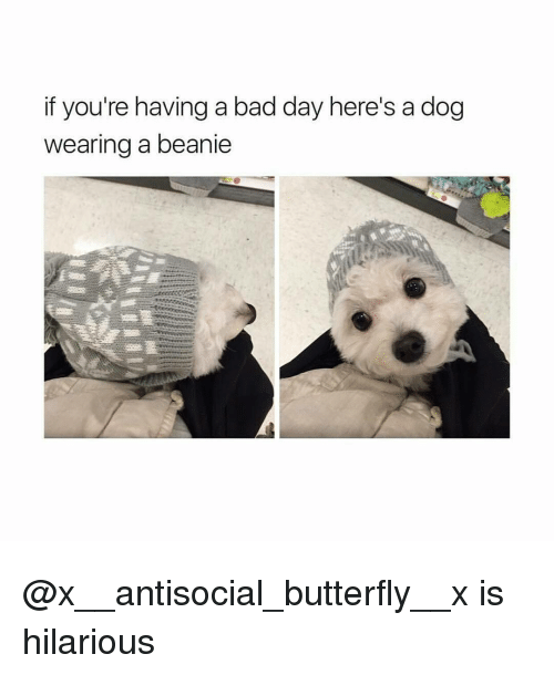 butterflys: if you're having a bad day here's a dog  wearing a beanie @x__antisocial_butterfly__x is hilarious