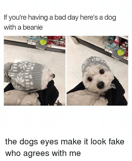 Bad, Bad Day, and Dogs: If you're having a bad day here's a dog  with a beanie the dogs eyes make it look fake who agrees with me