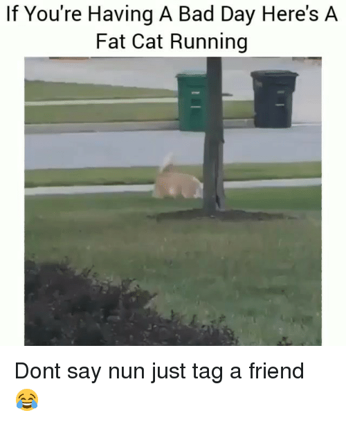 Bad, Bad Day, and Funny: If You're Having A Bad Day Here's A  Fat Cat Running Dont say nun just tag a friend 😂