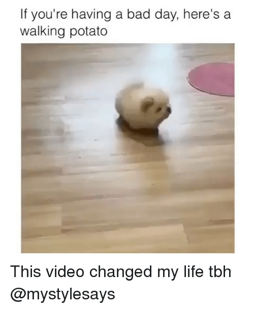 Bad, Bad Day, and Life: If you're having a bad day, here's a  walking potato This video changed my life tbh @mystylesays