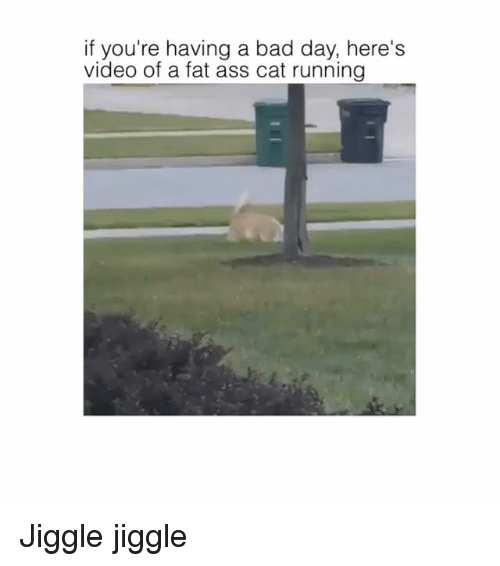Ass, Bad, and Bad Day: if you're having a bad day, here's  video of a fat ass cat running Jiggle jiggle