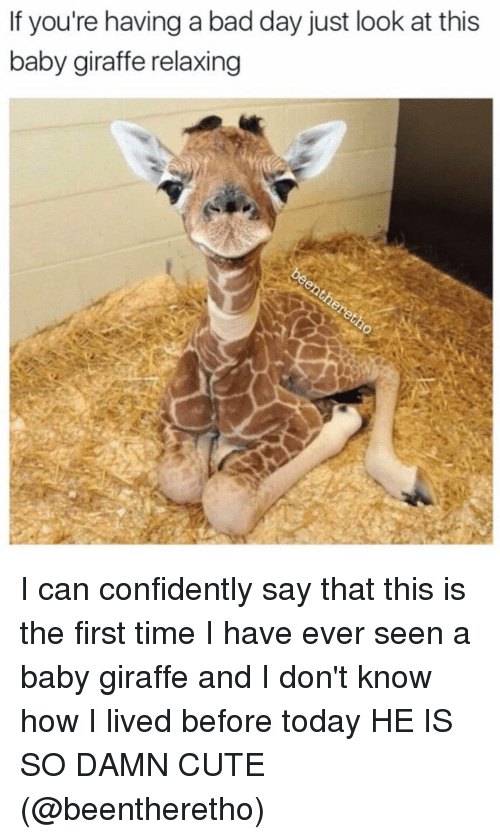 baby giraffe: If you're having a bad day just look at this  baby giraffe relaxing I can confidently say that this is the first time I have ever seen a baby giraffe and I don't know how I lived before today HE IS SO DAMN CUTE (@beentheretho)