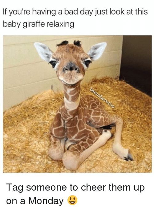 baby giraffe: If you're having a bad day just look at this  baby giraffe relaxing Tag someone to cheer them up on a Monday 😃