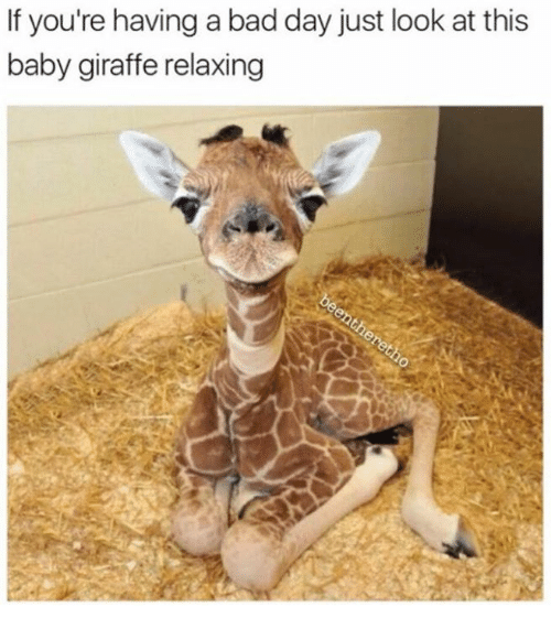 baby giraffe: If you're having a bad day just look at this  baby giraffe relaxing