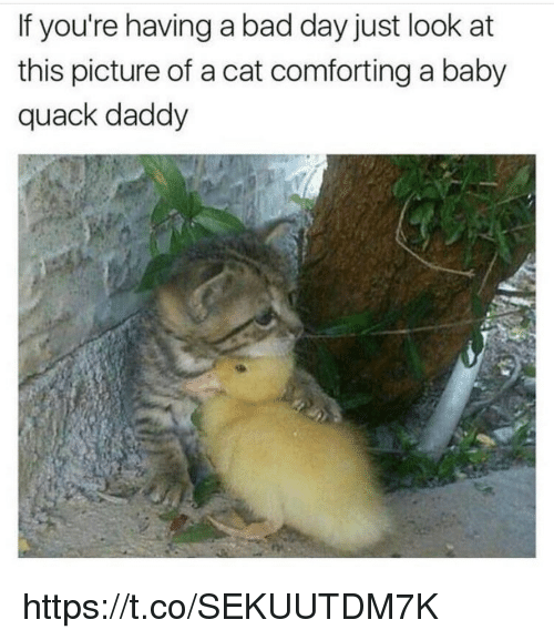 Bad, Bad Day, and Memes: If you're having a bad day just look at  this picture of a cat comforting a baby  quack daddy https://t.co/SEKUUTDM7K