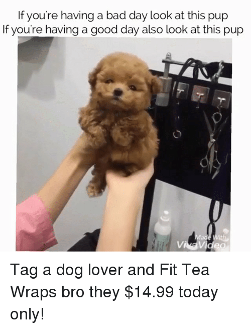 dog lovers: If you're having a bad day look at this pup  If you're having a good day also look at this pup  Vi Tag a dog lover and Fit Tea Wraps bro they $14.99 today only!