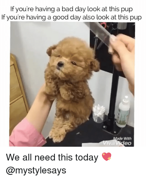 Bad, Bad Day, and Good: If you're having a bad day look at this pup  If you're having a good day also look at this pup  ade With  eo We all need this today 💖 @mystylesays