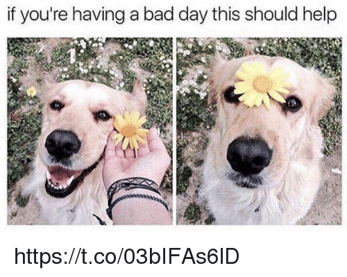 Bad, Bad Day, and Memes: if you're having a bad day this should help https://t.co/03bIFAs6lD