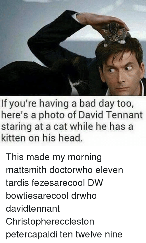 David Tennant: If you're having a bad day too,  here's a photo of David Tennant  staring at a cat while he has a  kitten on his head. This made my morning mattsmith doctorwho eleven tardis fezesarecool DW bowtiesarecool drwho davidtennant Christophereccleston petercapaldi ten twelve nine