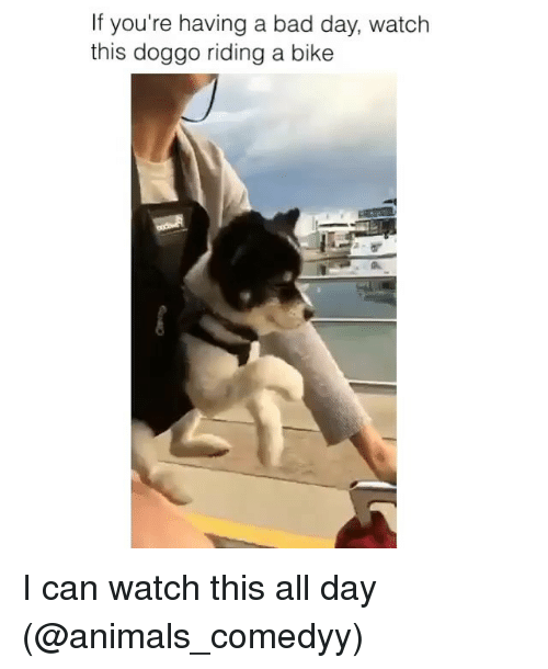 riding a bike: If you're having a bad day, watch  this doggo riding a bike I can watch this all day (@animals_comedyy)