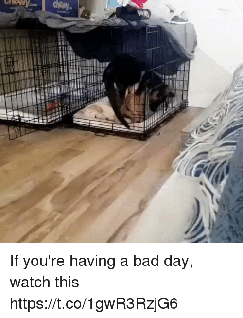 Bad, Bad Day, and Watch: If you're having a bad day, watch this https://t.co/1gwR3RzjG6