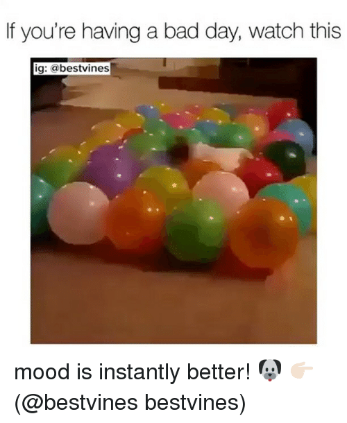 Bad, Bad Day, and Memes: If you're having a bad day, watch this  ig: abestvines mood is instantly better! 🐶 👉🏻(@bestvines bestvines)
