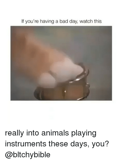Bad Day, Girl Memes, and If Your Having a Bad Day: If you're having a bad day, watch this really into animals playing instruments these days, you? @bltchybible
