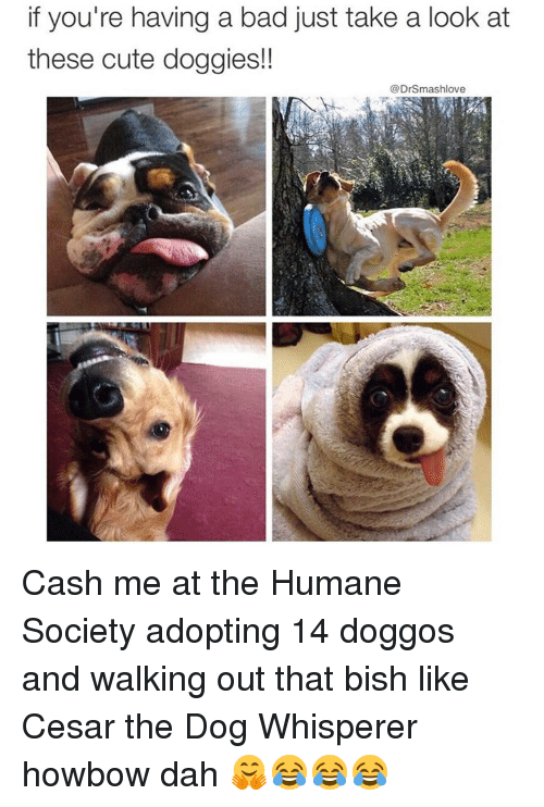 Memes, Humane Society, and Bishes: if you're having a bad just take a look at  these cute doggies!  Dr Smashlove Cash me at the Humane Society adopting 14 doggos and walking out that bish like Cesar the Dog Whisperer howbow dah 🤗😂😂😂