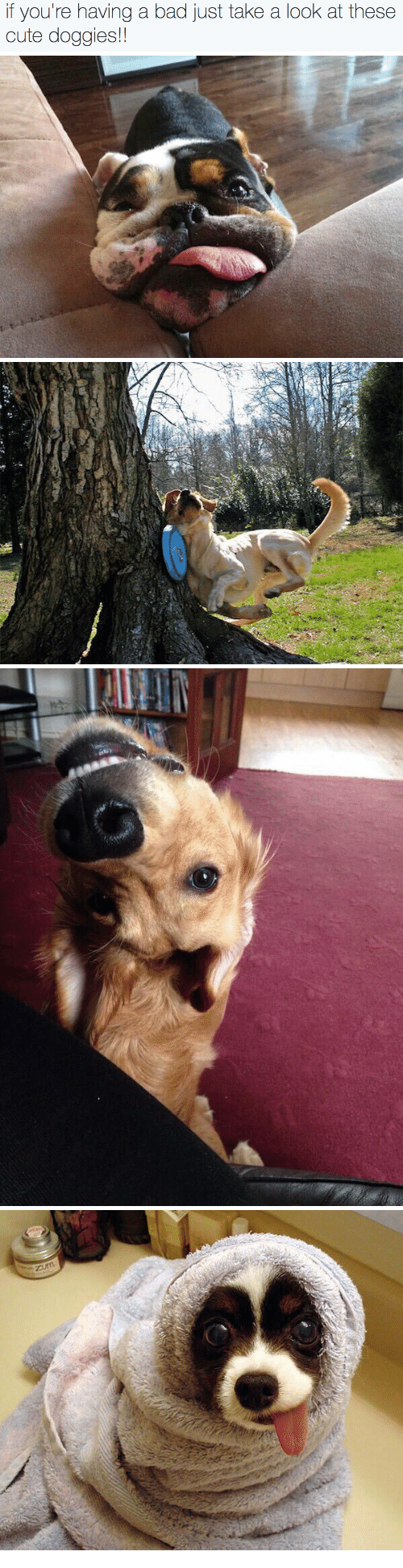 Bad, Cute, and Look: if you're having a bad just take a look at these  cute doggies!!