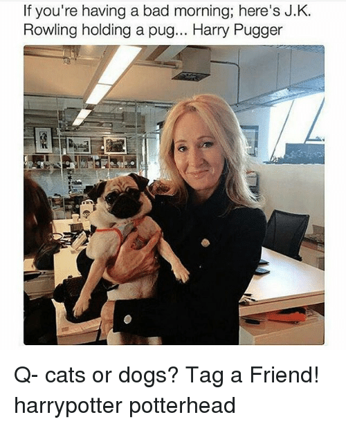 cat-or-dog: If you're having a bad morning; here's J.K.  Rowling holding a pug... Harry Pugger Q- cats or dogs? Tag a Friend! harrypotter potterhead