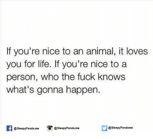 Nice: If you're nice to an animal, it loves  you for life. If you're nice to a  person, who the fuck knows  what's gonna happen.  @sleepy Panda.me  @sleepy Pandame  @sleepy Panda me
